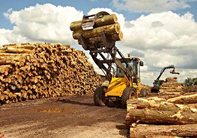 Top 10 – Cele mai puternice firme din industria lemnului din România
