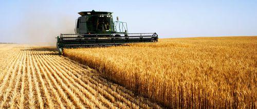 Mai puțin teren agricol românesc pentru străini. O nouă lege blochează investitorii străini