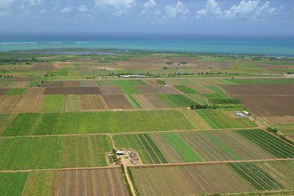 Terenurile agricole, tot mai căutate. Preţul lor urcă vertiginos, iar suprafaţa totală scade puternic