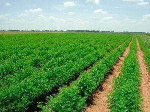 Prelungirea interdicţiei de vânzare a terenurilor agricole către străini nu poate fi realizată