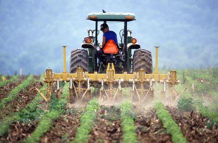 Terenurile agricole din România: aurul negru, epuizat rapid de străinii care cumpără en-gros