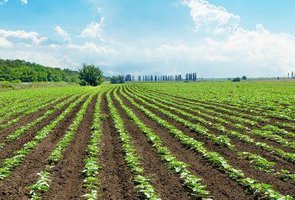 În trei săptămâni, străinii vor fi liberi să cumpere România agricolă