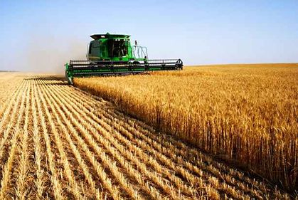 Afaceri agricole mai bănoase pentru fermierii dispuși să-și schimbe mentalitatea