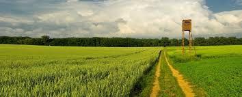 Investițiile în terenuri, preferatele clienților, își dovedesc eficiența pe termen lung