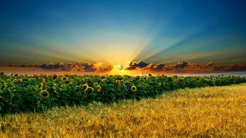 Străinii vor putea cumpăra terenuri agricole de la 1 ianuarie 2014, cu o singură condiţie