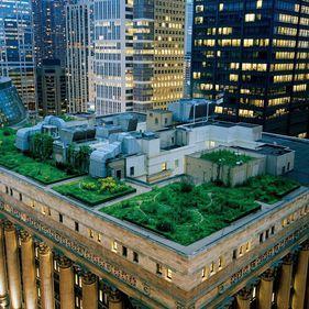 Construcțiile noi pot face orașele mai curate. Acoperișurile verzi reduc poluarea
