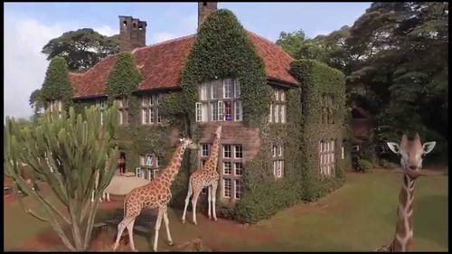 Hotelul cu girafe în curte: un altfel de boutique-hotel, în Africa
