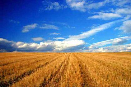 România, speculată la hectar. Terenurile agricole sunt transformate în platforme pentru centre comerciale