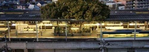 O gară construită în jurul unui copac milenar: un proiect pornit dintr-o superstiție