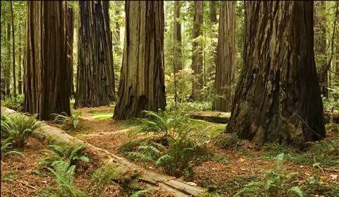 Regenerarea pădurilor: suprafața pe care s-au efectuat lucrări, mai mare cu peste 12%
