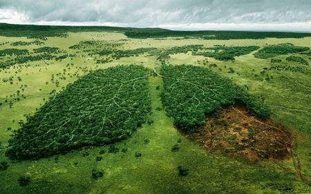 În România, se taie trei hectare de pădure în fiecare oră