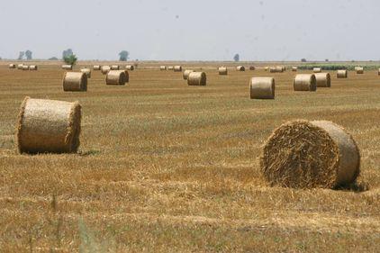 Terenurile agricole din România, ţinta străinilor în căutare de investiţii sigure