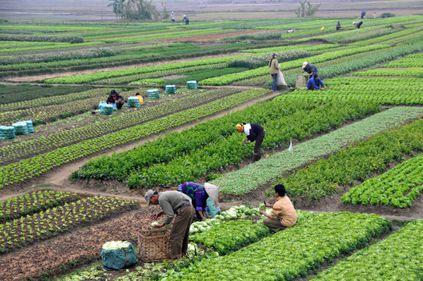 Risipa din agricultură: se pierd milioane de euro din neștiința proprietarilor