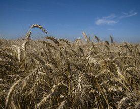 Vreţi să vă vindeţi terenurile agricole? Nu vă grăbiţi. În Marea Britanie preţurile au ajuns la 17.500 euro/hectar şi continuă să crească