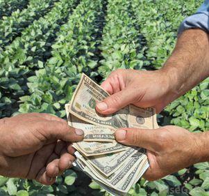 Îmbunătățiri notabile în agricultură: bani mai ușor de obținut, cu avantaje în fața distribuitorilor