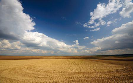 Străinii cumpără Aradul! Terenurile agricole se vând într-un ritm record