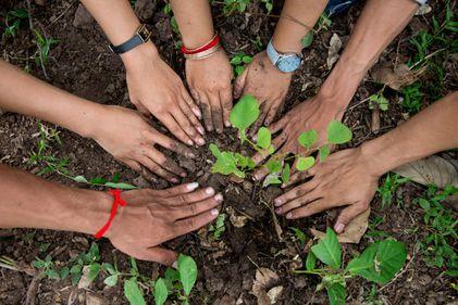 Românii, obligați să planteze copaci pentru fiecare clădire construită: se întâmplă în Ghimbav