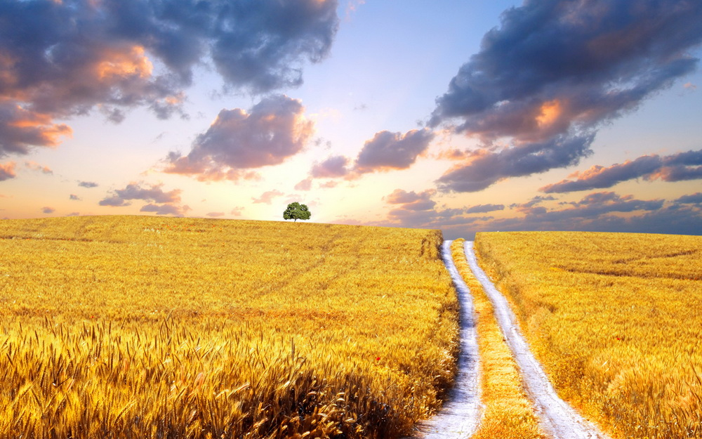 Top 10 – Țări cu cele mai mari suprafețe agricole din lume